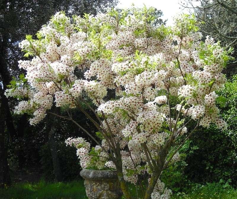 Floraisons printanières 2014 Dscn3152