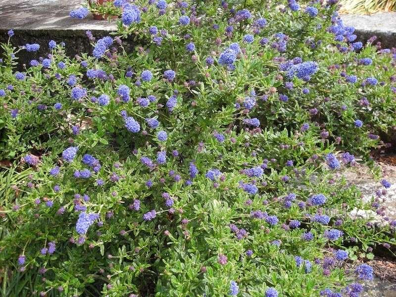 Floraisons printanières 2014 Dscn3153
