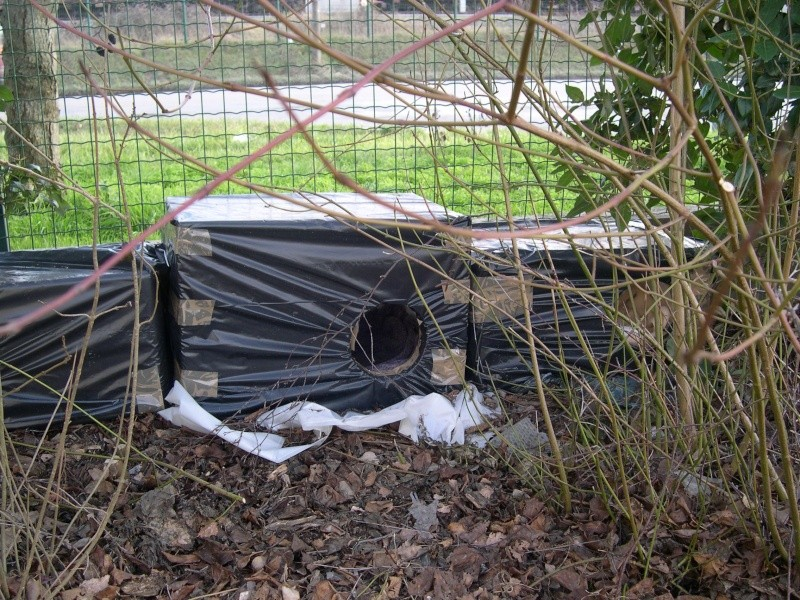 GRATUIT : dons de caissons en plystyrène pour fabriquer des abris anti-froid (chats nomades) Dscn2614