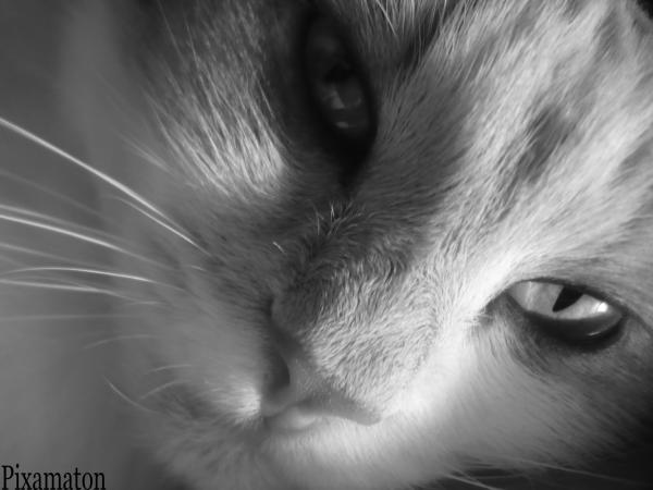 Votre premier chat - Page 2 18899711