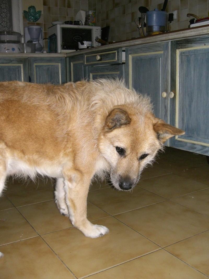 Collier qui ne casse pas le poil du chien Cimg0010