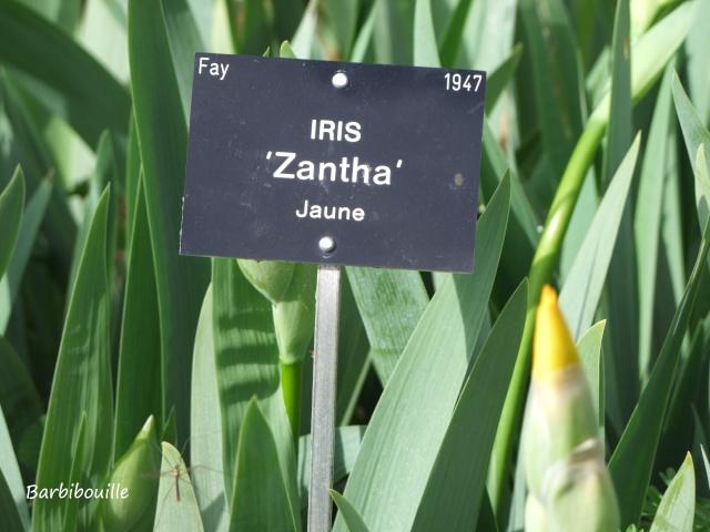 Iris du jardin botanique de Nancy. 03_mai22