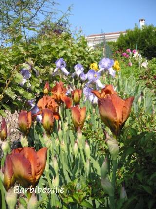 Plantation d'un talus 19_mai14