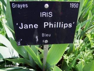 Iris du jardin botanique de Nancy. Jane_p10