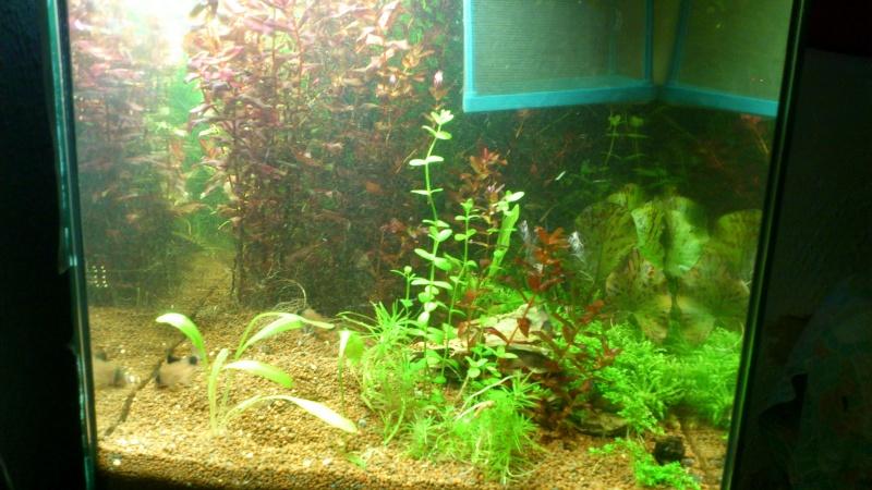 aquarium 54litres planté - Page 2 00310