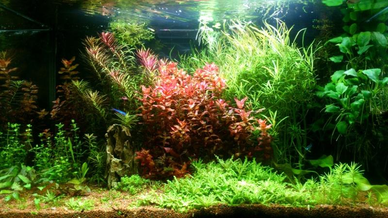 aquarium 54litres planté - Page 3 01210