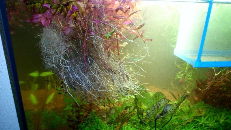 aquarium 54litres planté - Page 2 01410