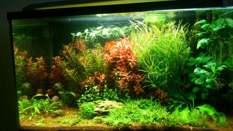 aquarium 54litres planté - Page 3 02110