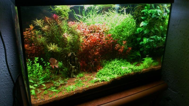 aquarium 54litres planté - Page 3 03410