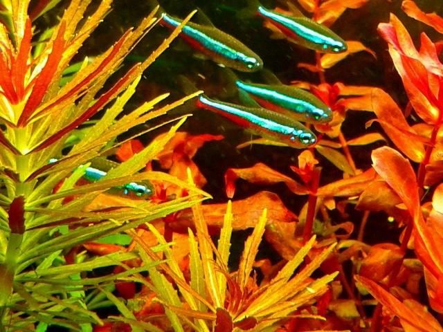 aquarium 54litres planté - Page 2 04611