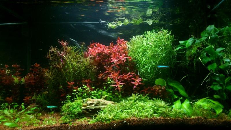 aquarium 54litres planté - Page 3 04612