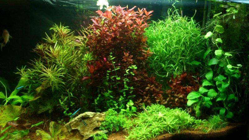 aquarium 54litres planté - Page 2 04710