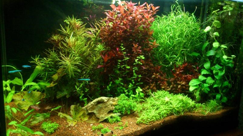 aquarium 54litres planté - Page 2 04910