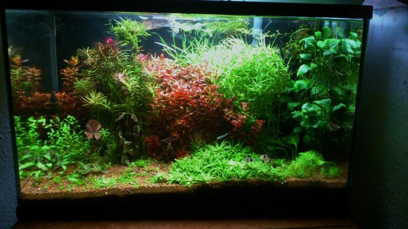 aquarium 54litres planté - Page 3 05210