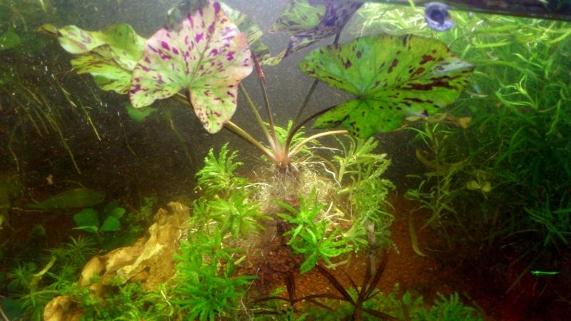 aquarium 54litres planté - Page 2 05410