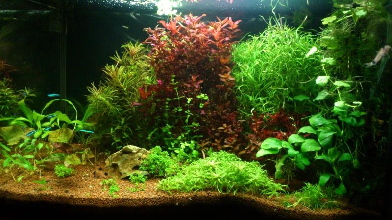 aquarium 54litres planté - Page 2 05510