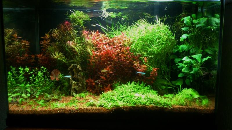 aquarium 54litres planté - Page 3 06210