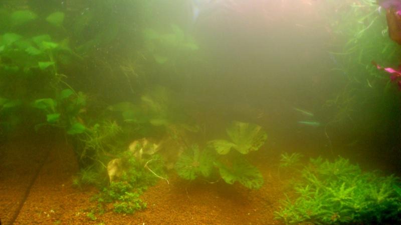 aquarium 54litres planté - Page 2 06310