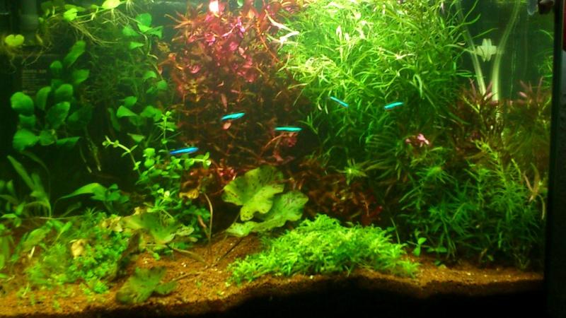 aquarium 54litres planté - Page 2 12210