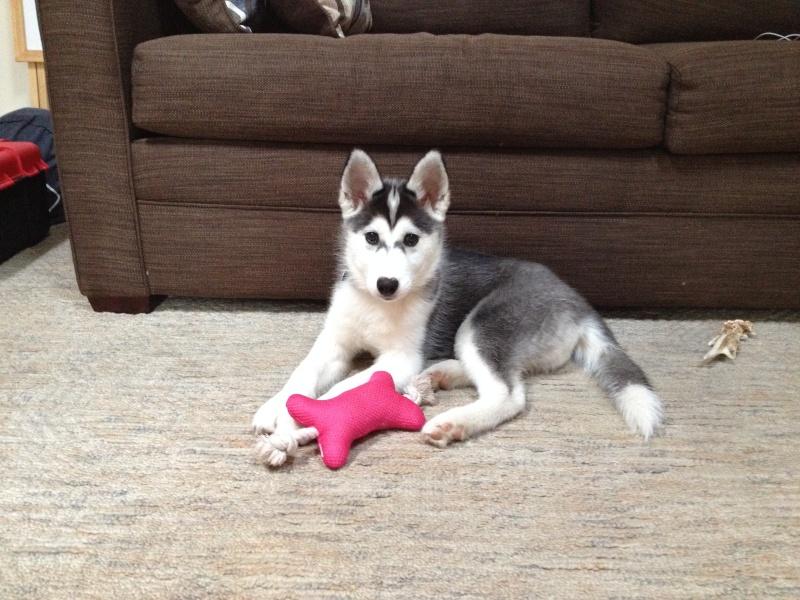 52 weeks of Layla *UPDATED 8/8/14* Layla_17