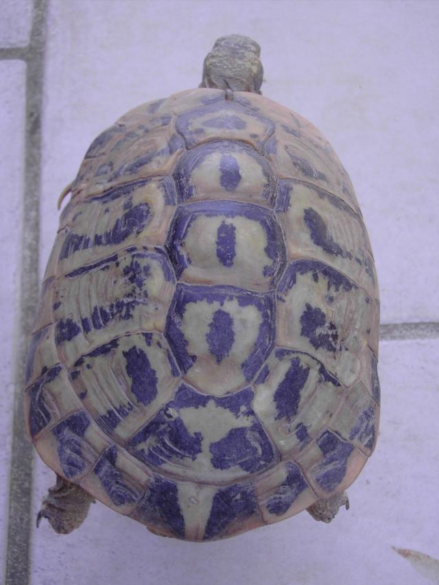 identification  Tortue16