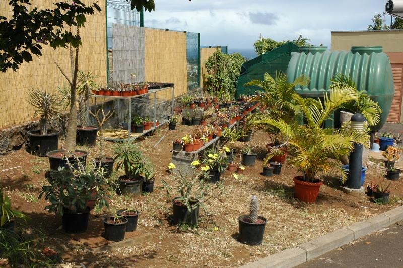 autres plantes... Dsc_0014