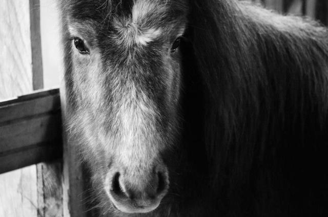 Lire le physique des chevaux - Linda Tellington Jones!  15450410
