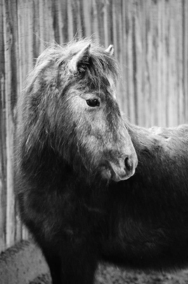 Lire le physique des chevaux - Linda Tellington Jones!  73508810