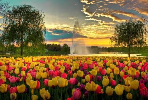 Chiacchiere... - Pagina 3 Tulipa10