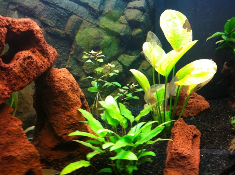 Aquarium 135L 110