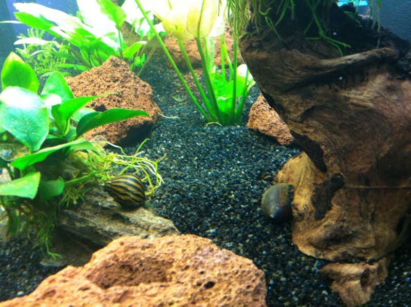 Aquarium 135L 210