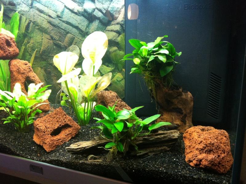 Aquarium 135L 310