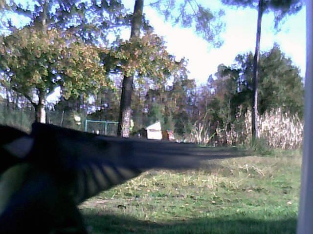 Quel est cet oiseau ? 000dc510