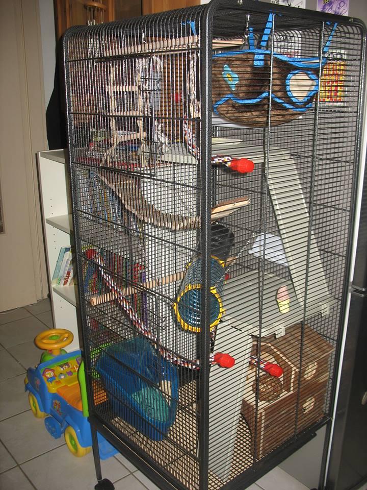 Besoin d'avis sur la cage de mes bébés :-) 13756810