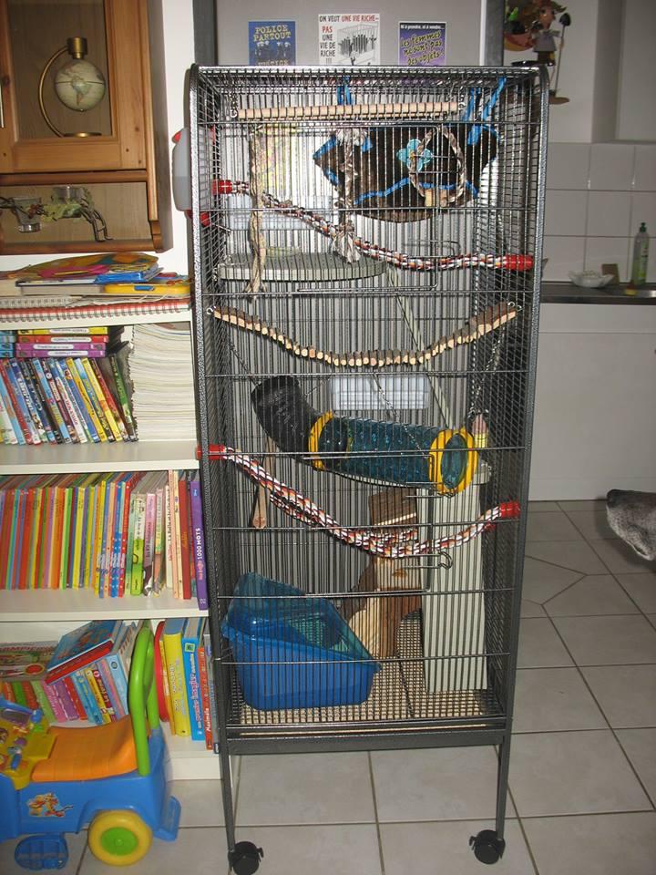 Besoin d'avis sur la cage de mes bébés :-) 13818510