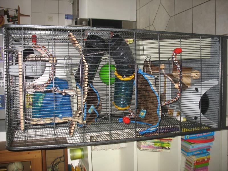 Besoin d'avis sur la cage de mes bébés :-) Img_0012