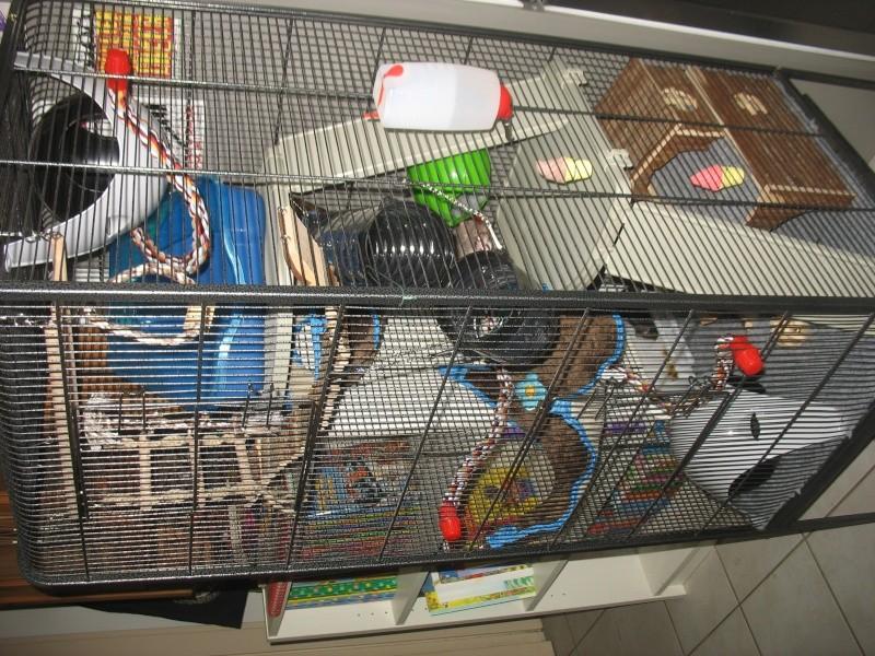 Besoin d'avis sur la cage de mes bébés :-) Img_0013