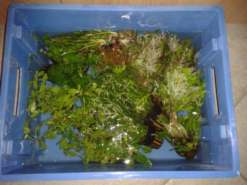 240 litres très planté  (j 'ai des algues) - Page 3 2014-017