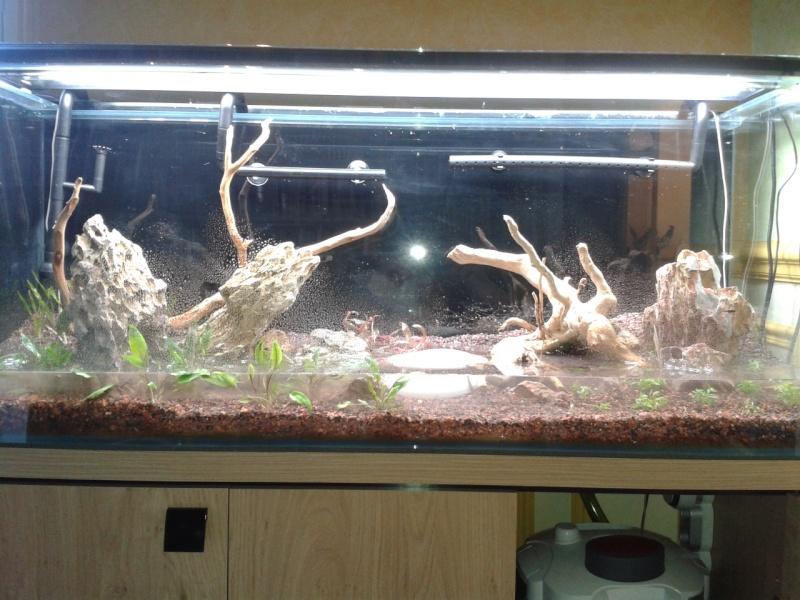 240 litres très planté  (j 'ai des algues) - Page 3 2014-018
