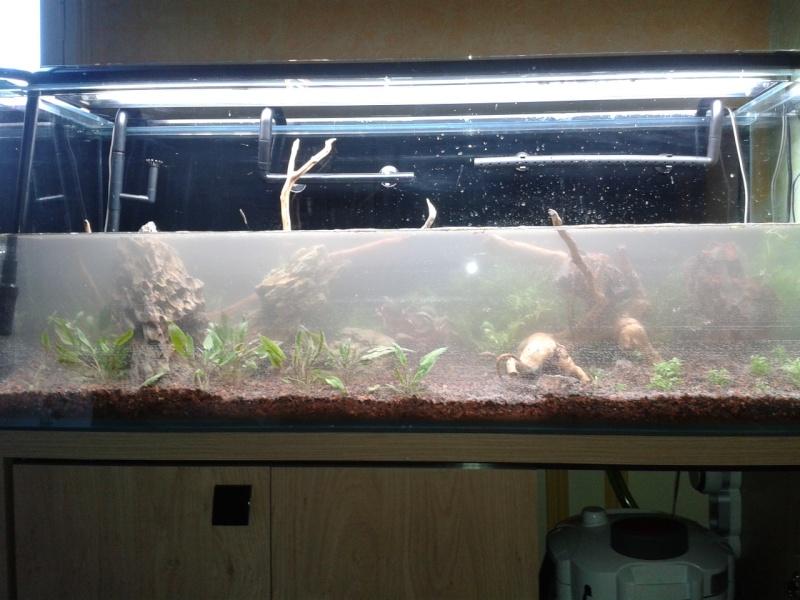 240 litres très planté  (j 'ai des algues) - Page 3 2014-021