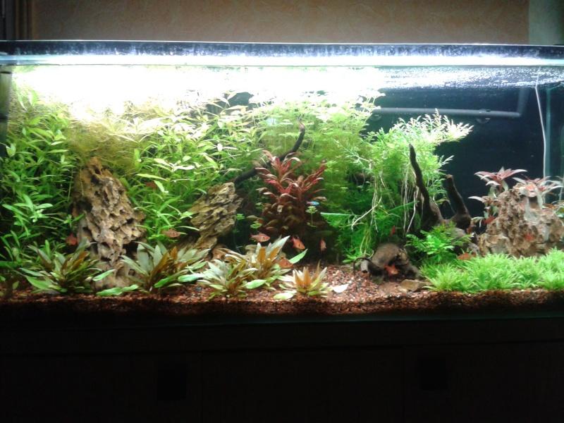 240 litres très planté  (j 'ai des algues) - Page 6 2014-037