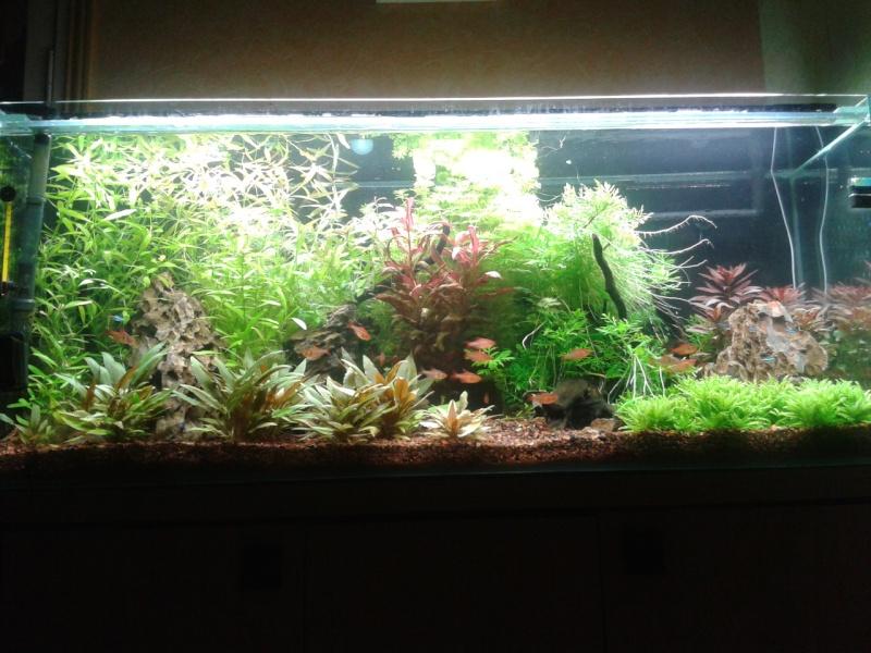 240 litres très planté  (j 'ai des algues) - Page 7 2014-042