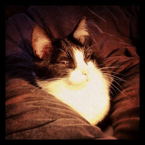 SOS Comportement chat d'une amie 30686110