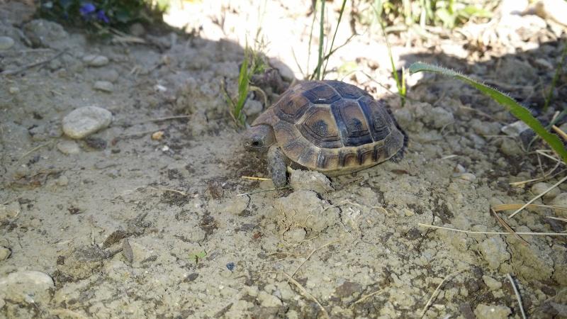 1er enclos de ma ptite tortue  20140412