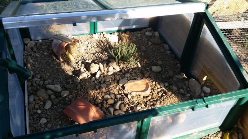 1er enclos de ma ptite tortue  20140415