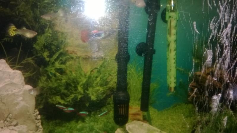 Mes poissons Wp_20128