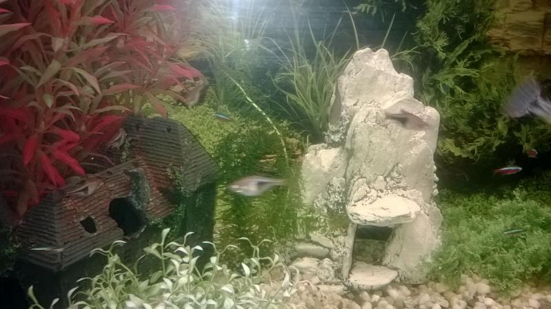 Mes poissons Wp_20129