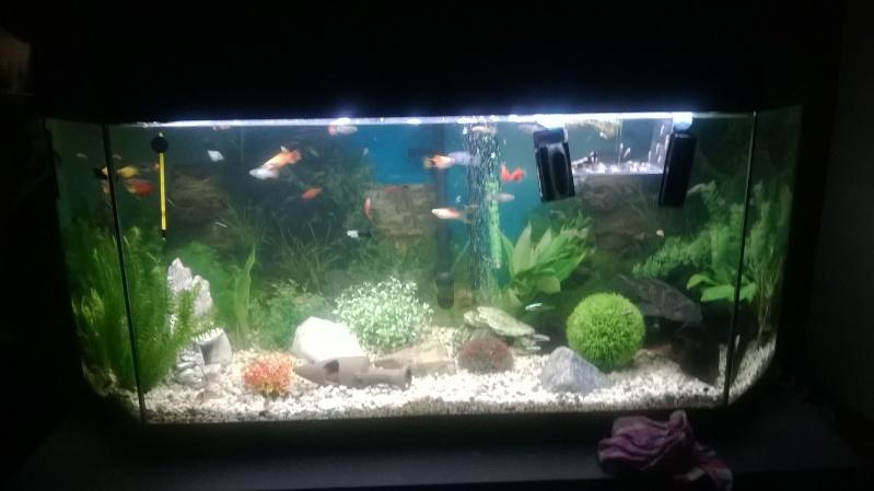 Mes poissons Wp_20131