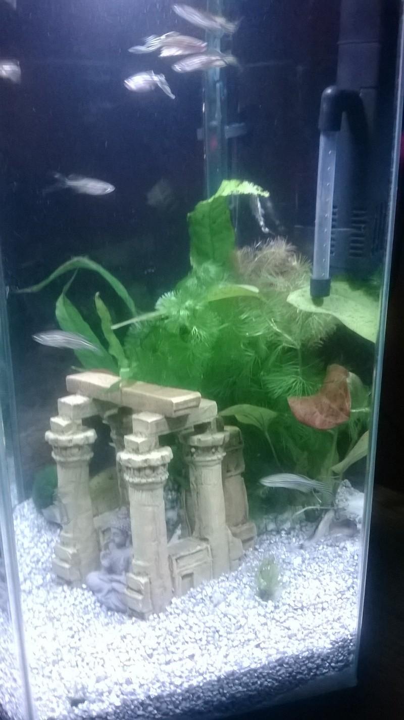 Mes poissons Wp_20133