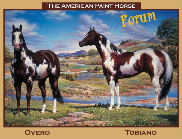 The American Paint Horse forum